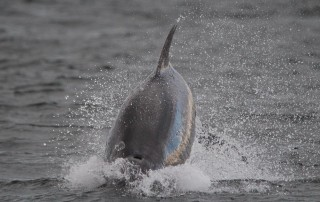 120601 - Scotland - Chanonry Point - lowres.jpg