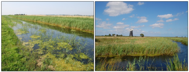 halvergate marshes - east anglia.PNG