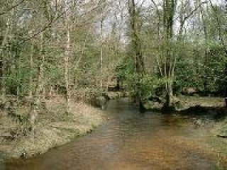 New Forest Image.jpg
