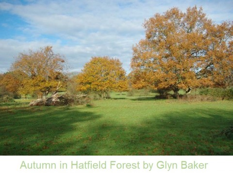 Autumn in Hatfield Forest_Glyn Baker.jpg