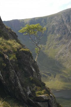 tree in Cwm Idwal 3.JPG