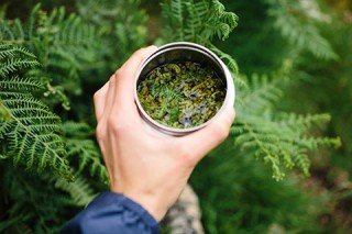 Go foraging in Dartmoor