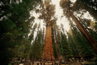 sequoia park us.jpg
